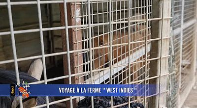 Voyage à la ferme West Indies